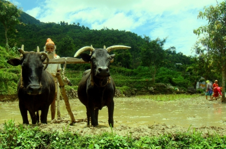 Preparazione per la semina del in Nepal