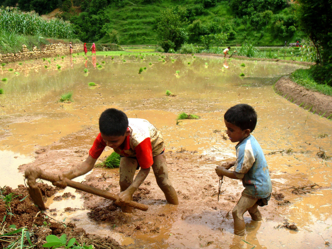 semina-riso-nepal