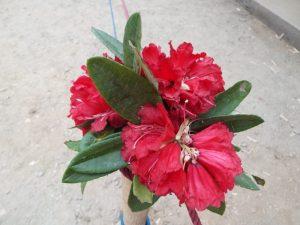 waku-nepal-fiori-per-inaugurazione-scuola