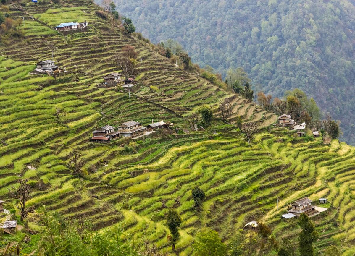 nepal paesaggio agricolo